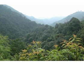大瑶山自然保护区