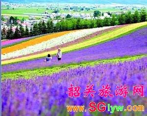 广州番禺百万葵园一天游