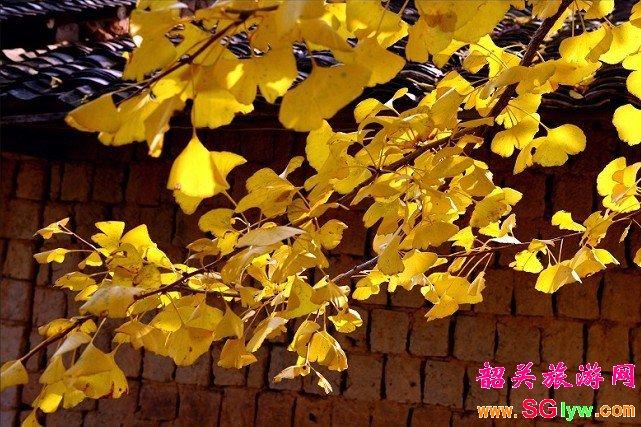 秋季专线 坪田银杏、丹霞山、南华寺三日游
