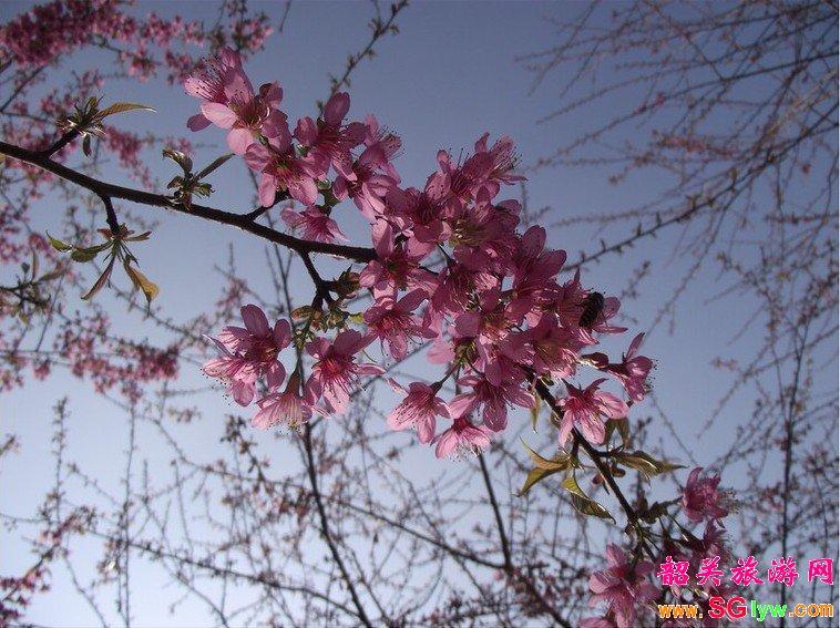 丹霞山、南华寺、樱花公园、曹溪温泉两天纯玩团