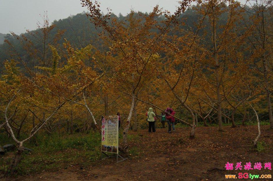2013年南雄帽子峰林场