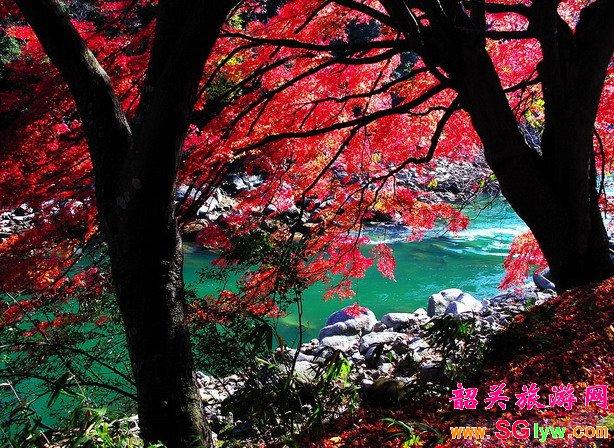新丰云髻山赏红叶、摘杨桃农家乐一日游