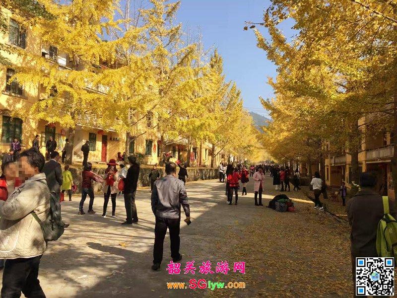2016年12月韶关南雄帽子峰林场银杏